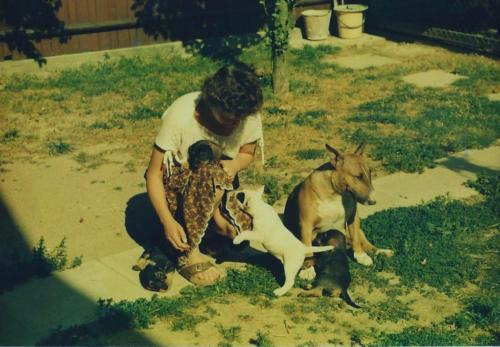 bulterierka se svým synem a štěňaty jezevčíků
